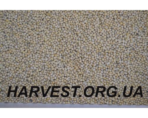 Соя Хайстар (Histar), семена NorthStar