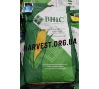 Семена кукурузы ВН 6763