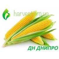 Семена кукурузы ДН Днипро