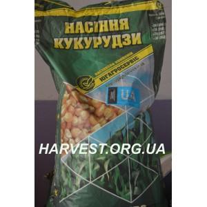 Семена кукурузы ДН Хотин