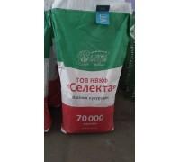 Семена кукурузы ПОЛТАВА (ФАО 270) (Селекта)