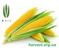 Семена кукурузы Твердыня