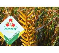 Семена кукурузы Бестселлер 287 СВ