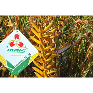 Семена кукурузы Бестселер 287 СВ