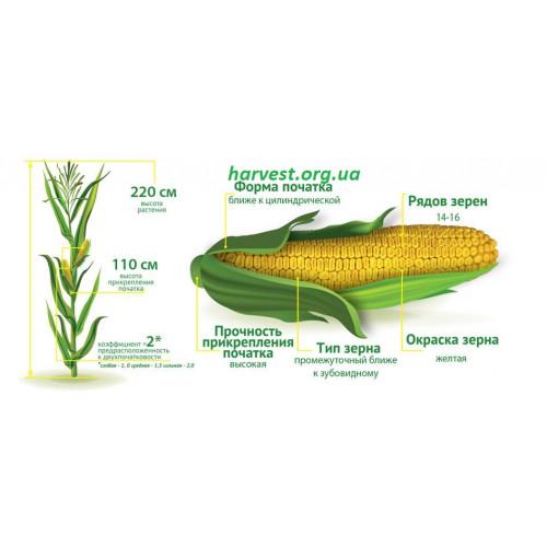 Семена кукурузы ДМС Прайм