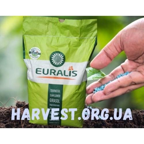 Семена подсолнечника ЕС Белла (ES Bella)