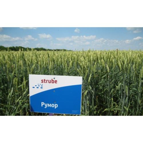 Семена озимой пшеницы Румор